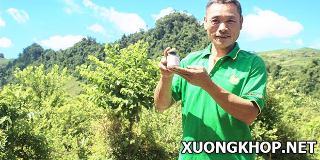 Thực hư bài thuốc chữa khỏi bệnh xương khớp cho hàng nghìn người ở Mộc Châu, Sơn La
