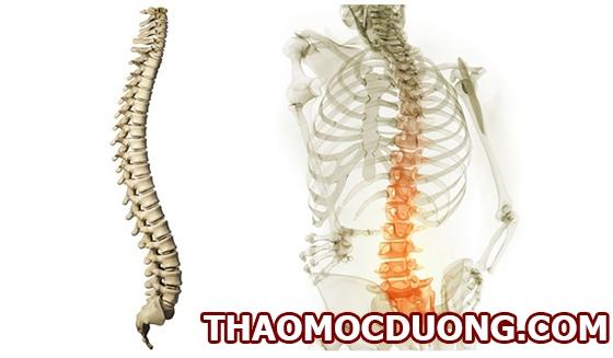 Toàn bộ thông tin về bệnh thoái hóa cột sống thắt lưng quan trọng nhất 1