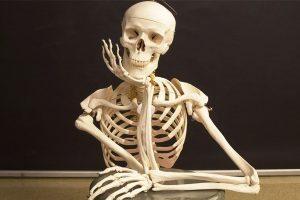 Đặc điểm cấu trúc và chức năng của xương bình thường