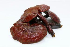 Hướng dẫn cách dùng nấm linh chi để chữa trị bệnh viêm khớp