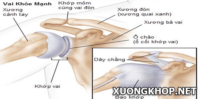 Viêm quanh khớp bả vai và cánh tay, nguyên nhân và cách phòng tránh