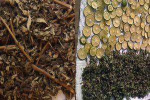 Dùng cây ngải cứu đúng cách rút ngắn thời gian chữa thoát vị đĩa đệm