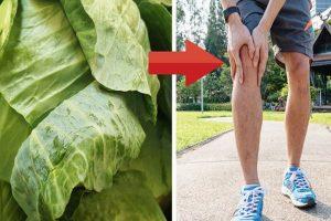 Tác dụng chữa bệnh gout từ quả cherry, cây lá vối, cây bắp cải